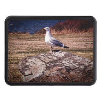 Gull from Rhode Island photos Hitch cover