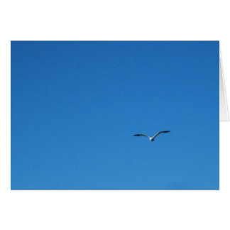 Gull Greeting Cards