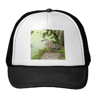 Gull Mesh Hats