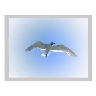 Gull in Flight 2 postcard