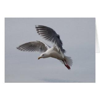gull in flight alki today greeting card