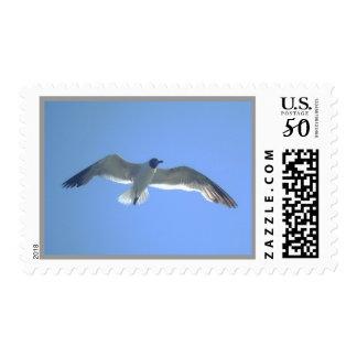 Gull in Flight Postage