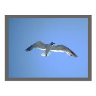 Gull in Flight postcard