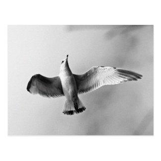 Gull in glide postcard