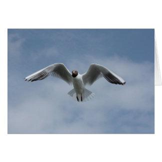 gull in the sky card