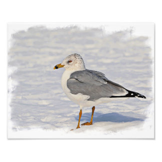 Gull in the snow photo print