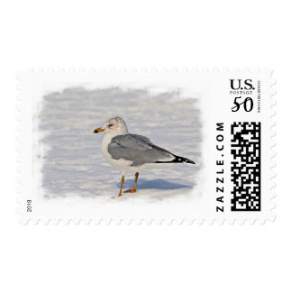 Gull in the snow postage
