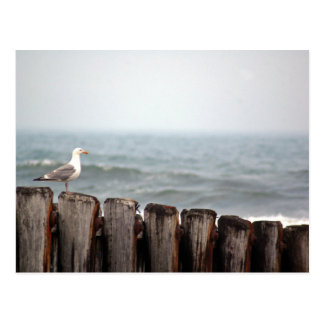 Gull on Jetty Postcard