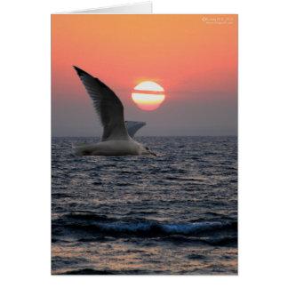 Gull on Lake Superior Card
