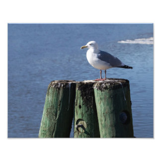 Gull on Pilings Photographic Print