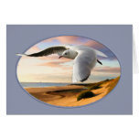 Gull on the Wing Over Beach Card