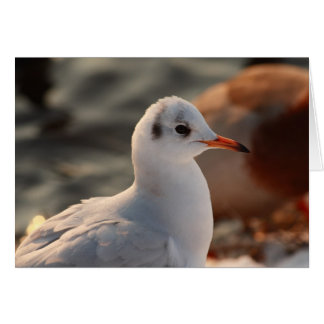 gull portrait card