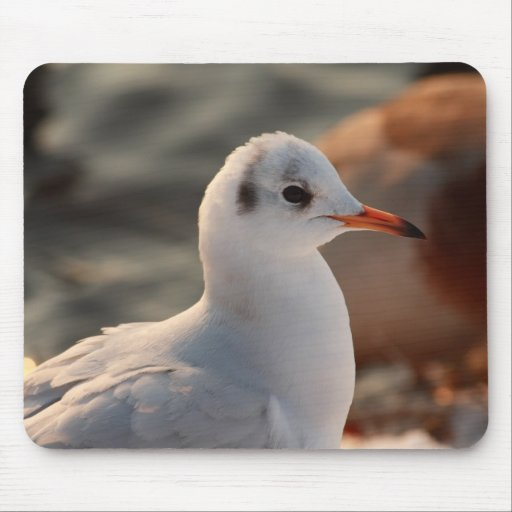 gull portrait mousepad