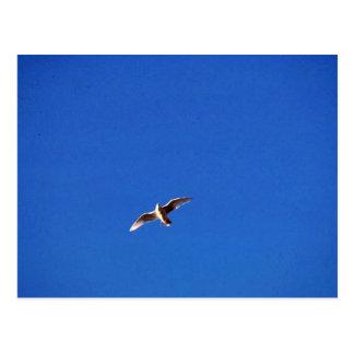 Gull Postcard