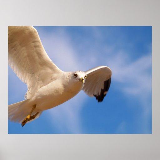 Gull Poster