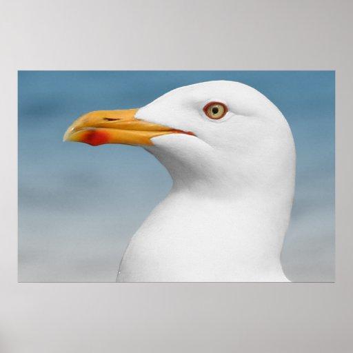 Gull Poster Print