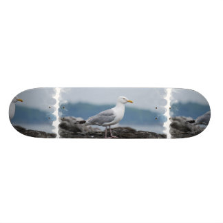 Gull Skateboard