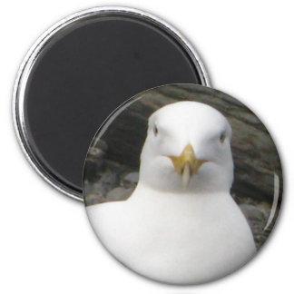 Gull Stare 2 Inch Round Magnet