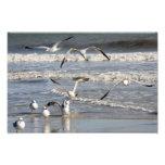 Gull time at the beach photo print