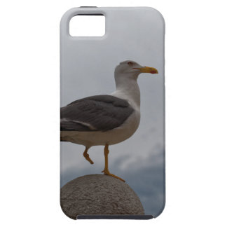 Gull with one leg iPhone SE/5/5s case