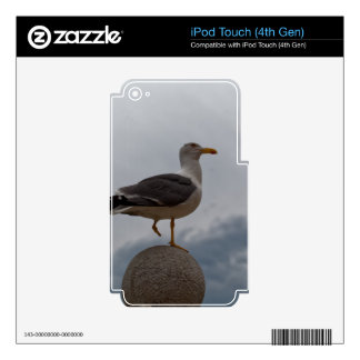 Gull with one leg iPod touch 4G skin