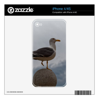 Gull with one leg skin for the iPhone 4S