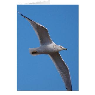 Gull Zoom 15 Card