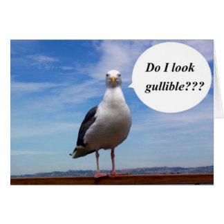 gullible seagull card
