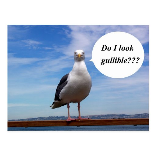 gullible seagull postcard