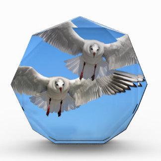 gulls-654046 SEAGULLS GULLS BIRDS WILD ANIMALS FLY Acrylic Award