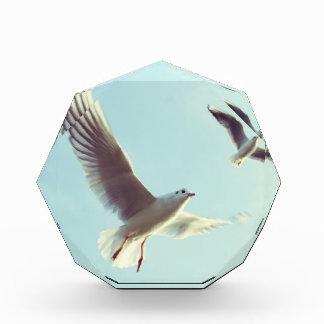 gulls acrylic award