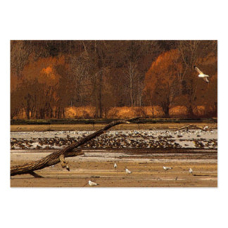 Gulls and Geese ATC Large Business Card