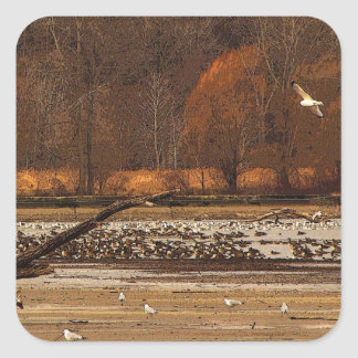 Gulls and Geese Square Sticker