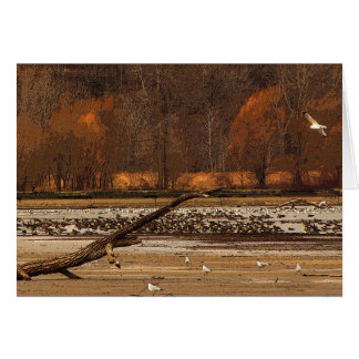 Gulls and Geese Thank You Card