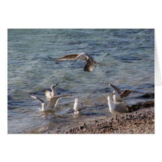 Gulls at Beach Card