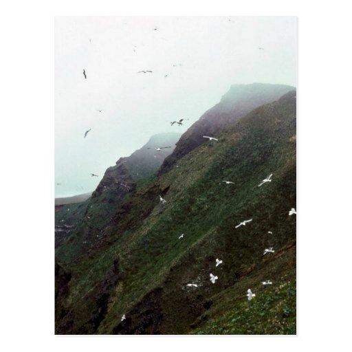 Gulls at St. Paul Island Postcard