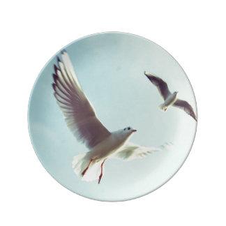 gulls dinner plate