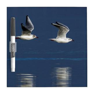 Gulls flying Dry-Erase board