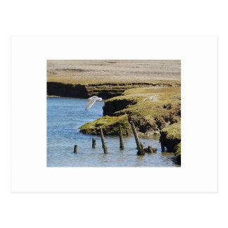 Gulls in Flight Postcard