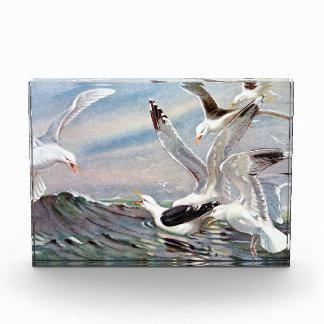 Gulls In Ocean Acrylic Award