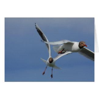 gulls in the sky card