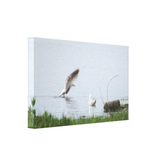 Gulls In The Water Canvas Print