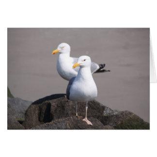 Gulls Looking Forward Card