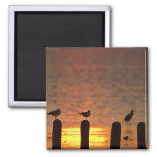 Gulls on pilings in Laguna Madre, South Padre 2 Inch Square Magnet