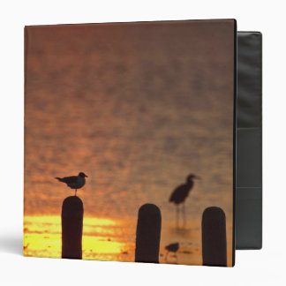 Gulls on pilings in Laguna Madre, South Padre 3 Ring Binder