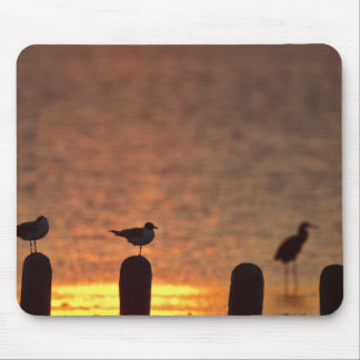 Gulls on pilings in Laguna Madre, South Padre Mouse Pad