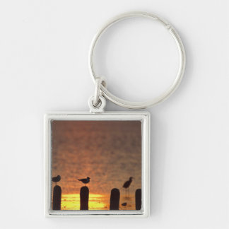 Gulls on pilings in Laguna Madre, South Padre Silver-Colored Square Keychain