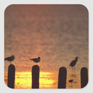 Gulls on pilings in Laguna Madre, South Padre Square Sticker