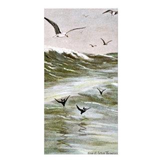 Gulls on The Ocean Custom Photo Card