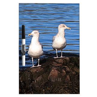 Gulls on the rocks Dry-Erase board